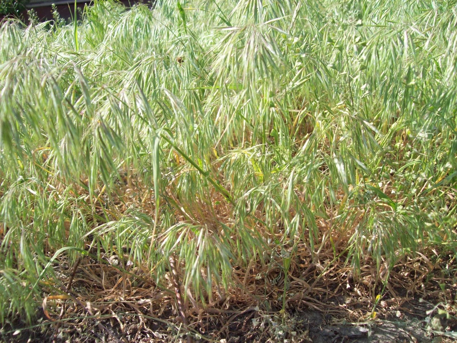 Скачать картинку Трава, Растения в телефон бесплатно.