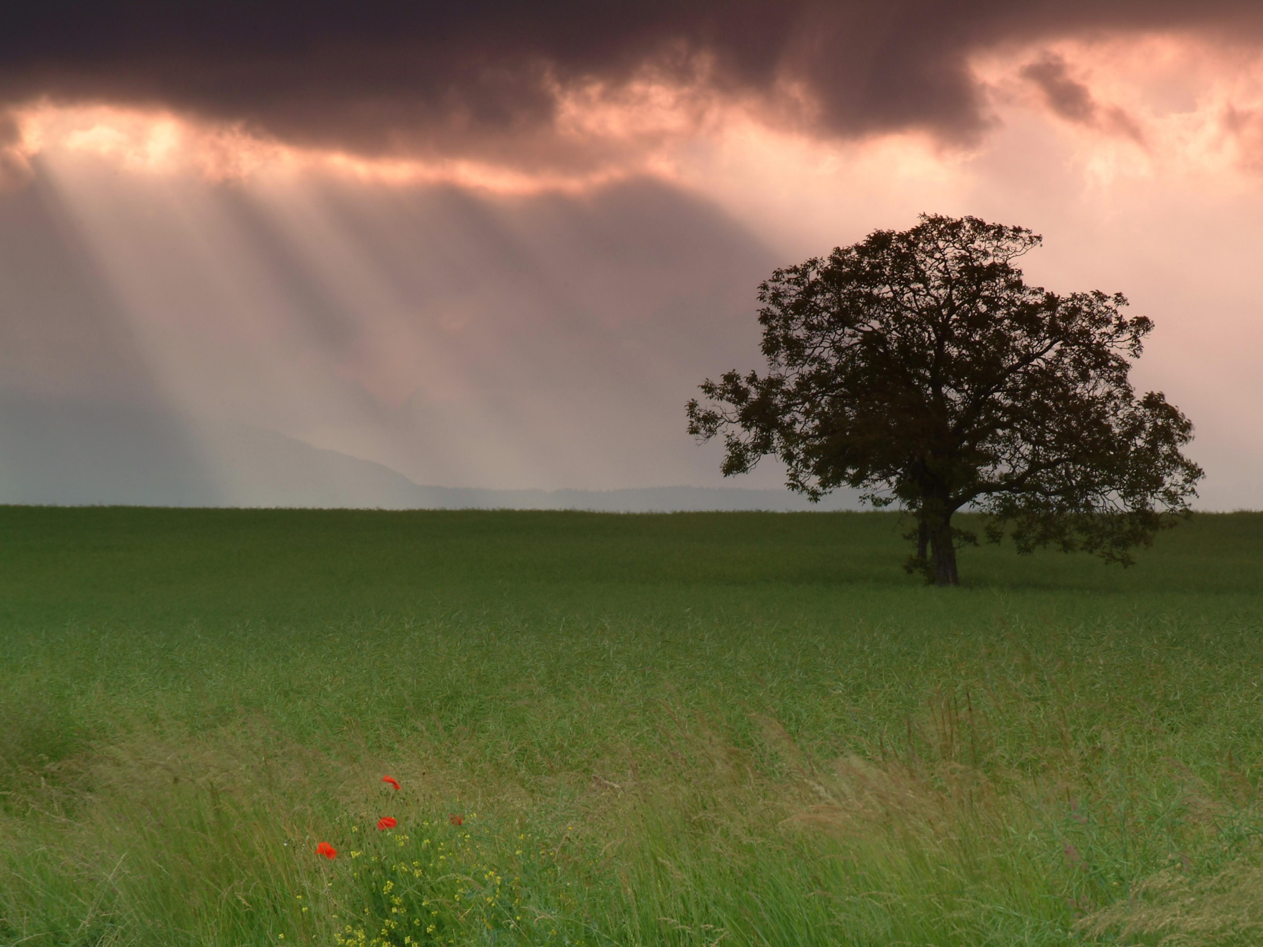 22716 скачать обои Пейзаж, Деревья, Поля, Облака - заставки и картинки бесплатно