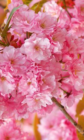 16417 скачать обои Растения, Цветы, Фон - заставки и картинки бесплатно