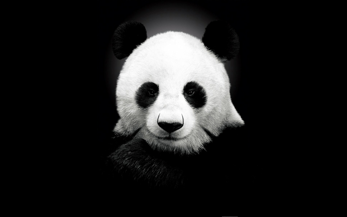 14172 download wallpaper Animals, Bears, Pandas screensavers and pictures for free