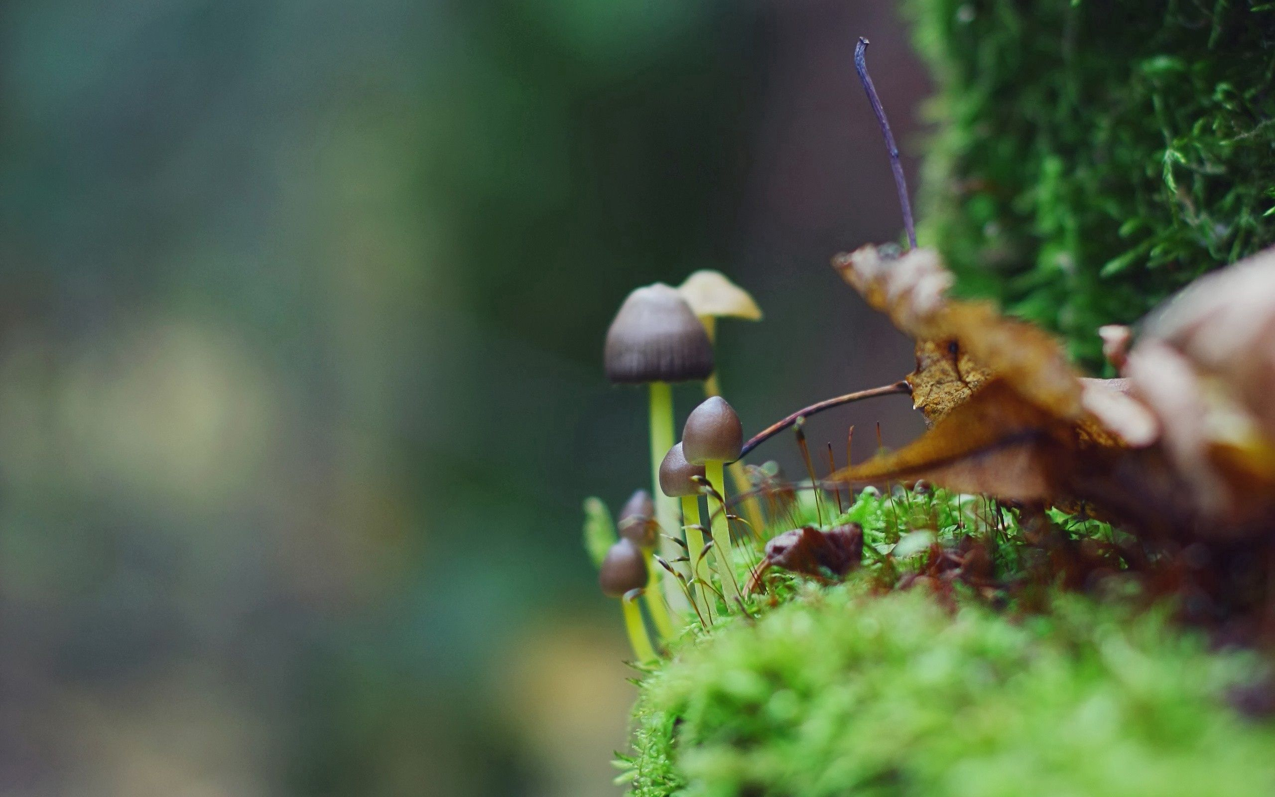 118487 Screensavers and Wallpapers Mashrooms for phone. Download Grass, Leaves, Mashrooms, Macro, Moss pictures for free
