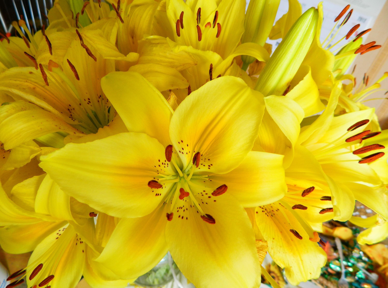 108613 скачать Желтые обои на телефон бесплатно, Цветы, Лилии, Букет, Яркие, Тычинки Желтые картинки и заставки на мобильный