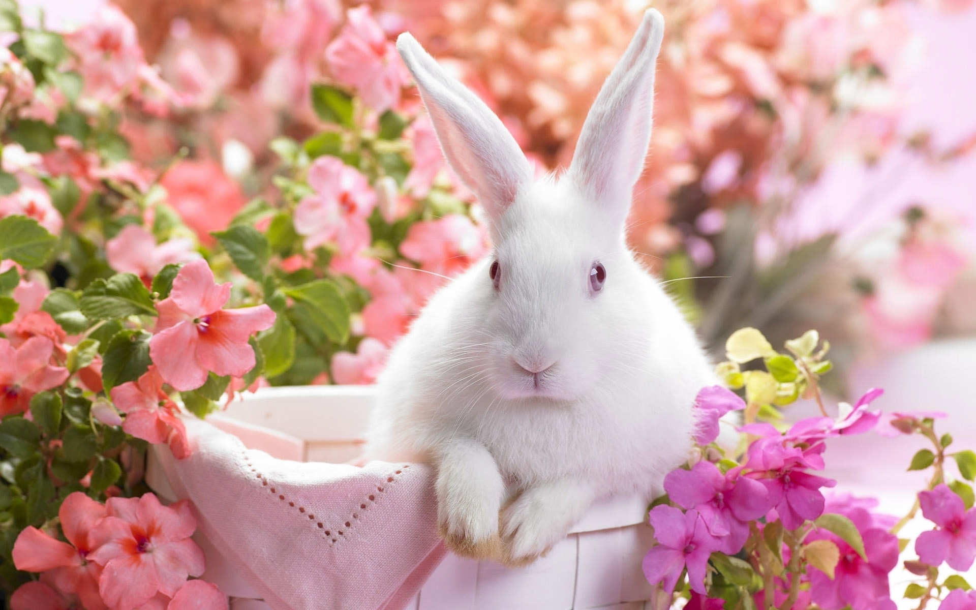 42424 download wallpaper Animals, Rabbits screensavers and pictures for free