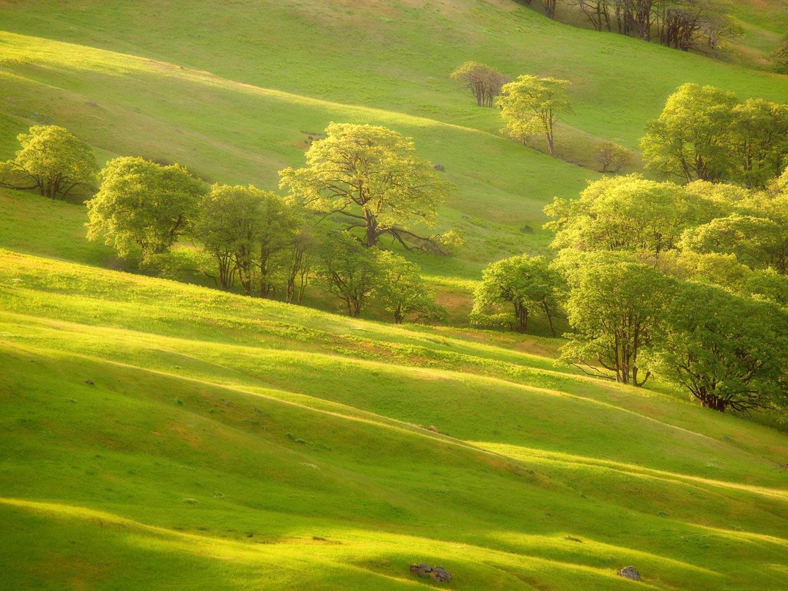 2073 скачать обои Пейзаж, Деревья - заставки и картинки бесплатно