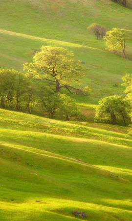 2073 download wallpaper Landscape, Trees screensavers and pictures for free