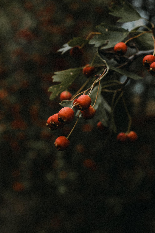 133592 скачать обои Природа, Шиповник, Растение, Куст - заставки и картинки бесплатно