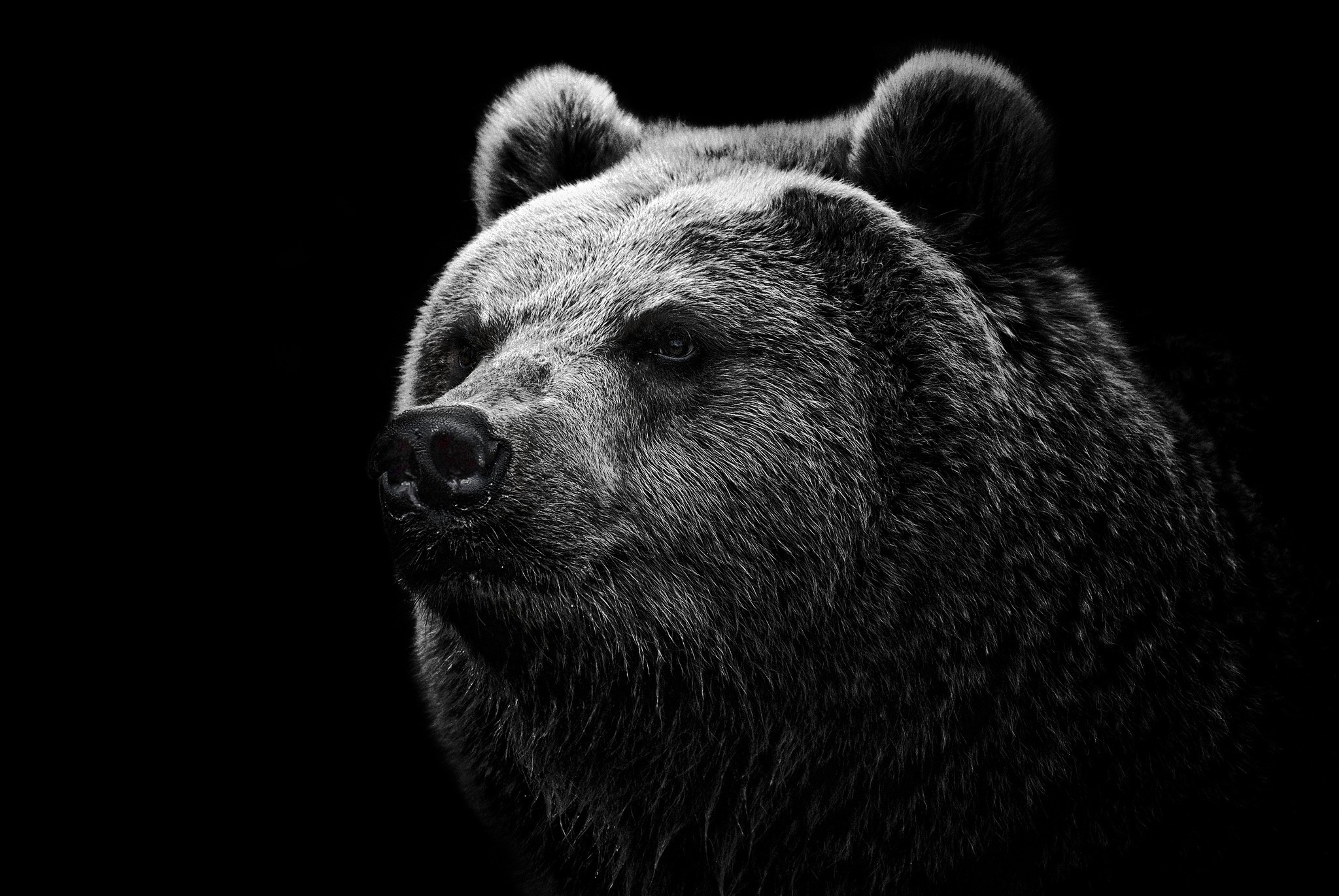 156923 Protetores de tela e papéis de parede Opinião em seu telefone. Baixe Suportar, Urso, Visão, Opinião, Nariz, Urso-Pardo, Grizzly fotos gratuitamente