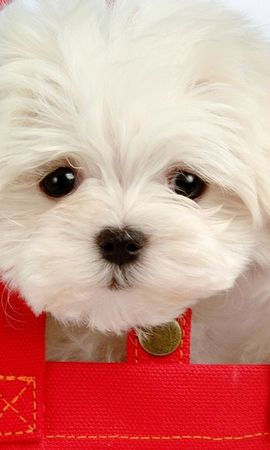 2005 descargar fondo de pantalla Animales, Perros: protectores de pantalla e imágenes gratis