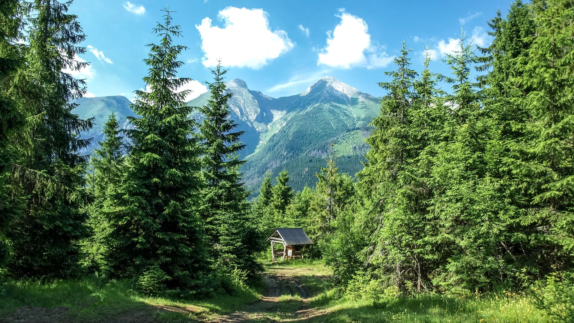 120004 Screensavers and Wallpapers Summer for phone. Download Mountains, Nature, Trees, Grass, Summer, Forest pictures for free