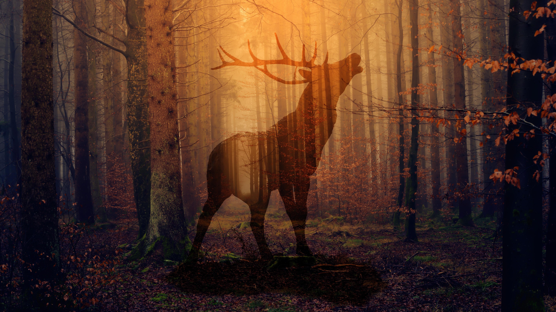 Download free Deer HD pictures