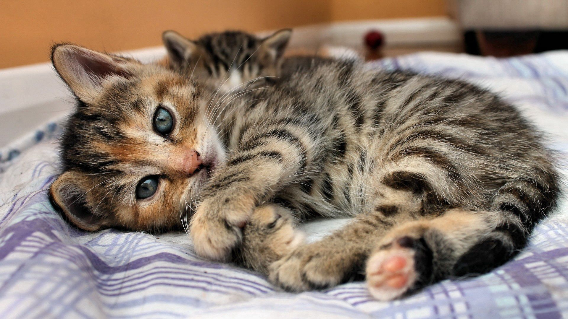 140348 Screensavers and Wallpapers Kitten for phone. Download Animals, Cat, Lies, Kitty, Kitten, Eyes, Sight, Opinion, Stripes, Bed, Strips pictures for free