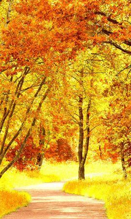 21951 скачать обои Пейзаж, Деревья, Дороги, Осень - заставки и картинки бесплатно