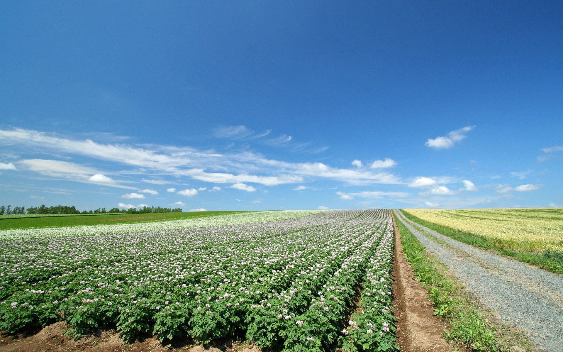 138717 download wallpaper Nature, Field, Plantation, Agriculture screensavers and pictures for free
