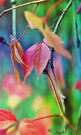 20780 скачать обои Растения, Листья - заставки и картинки бесплатно