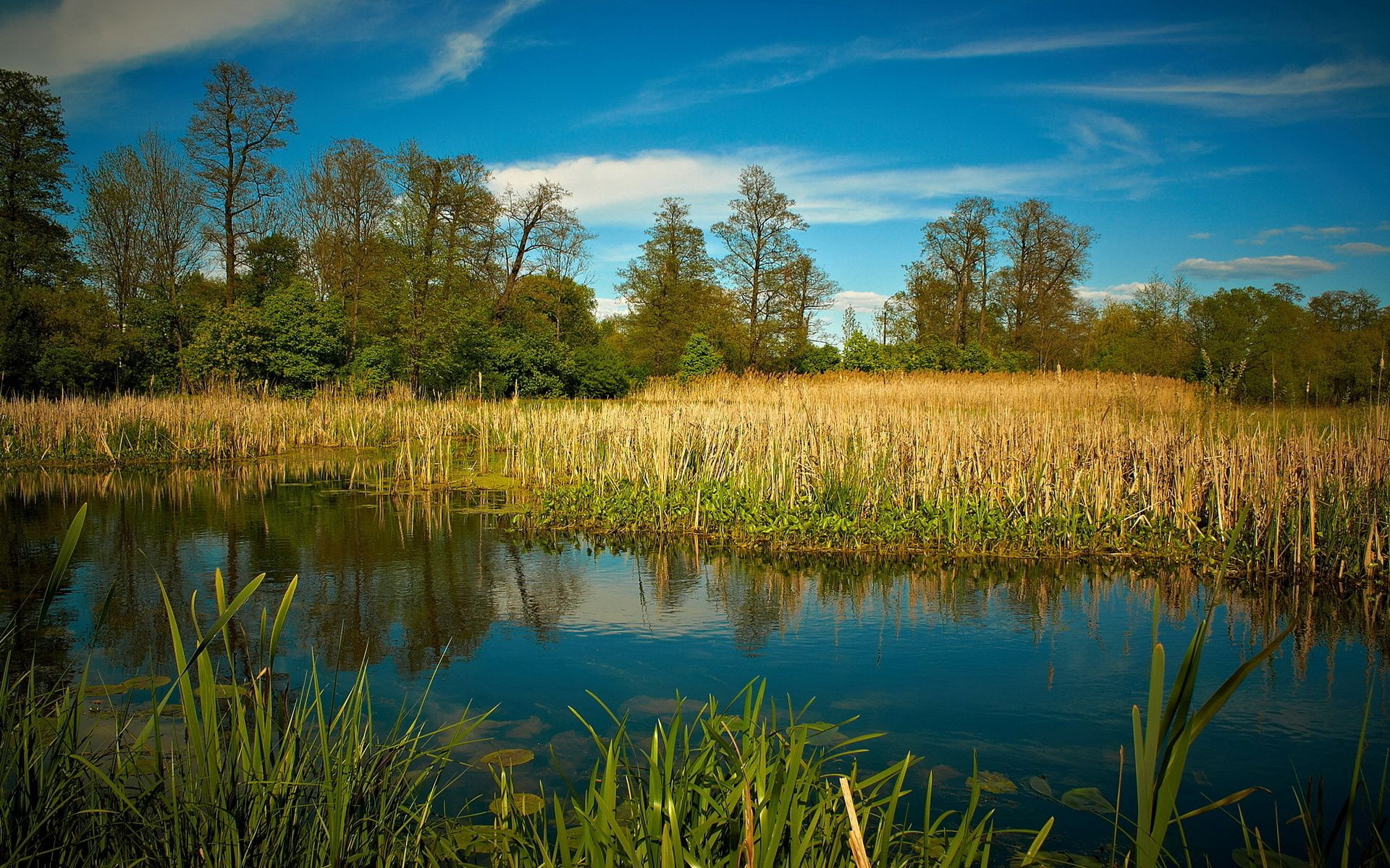 54313 download wallpaper Landscape, Nature, Lake, Forest, Vegetation screensavers and pictures for free