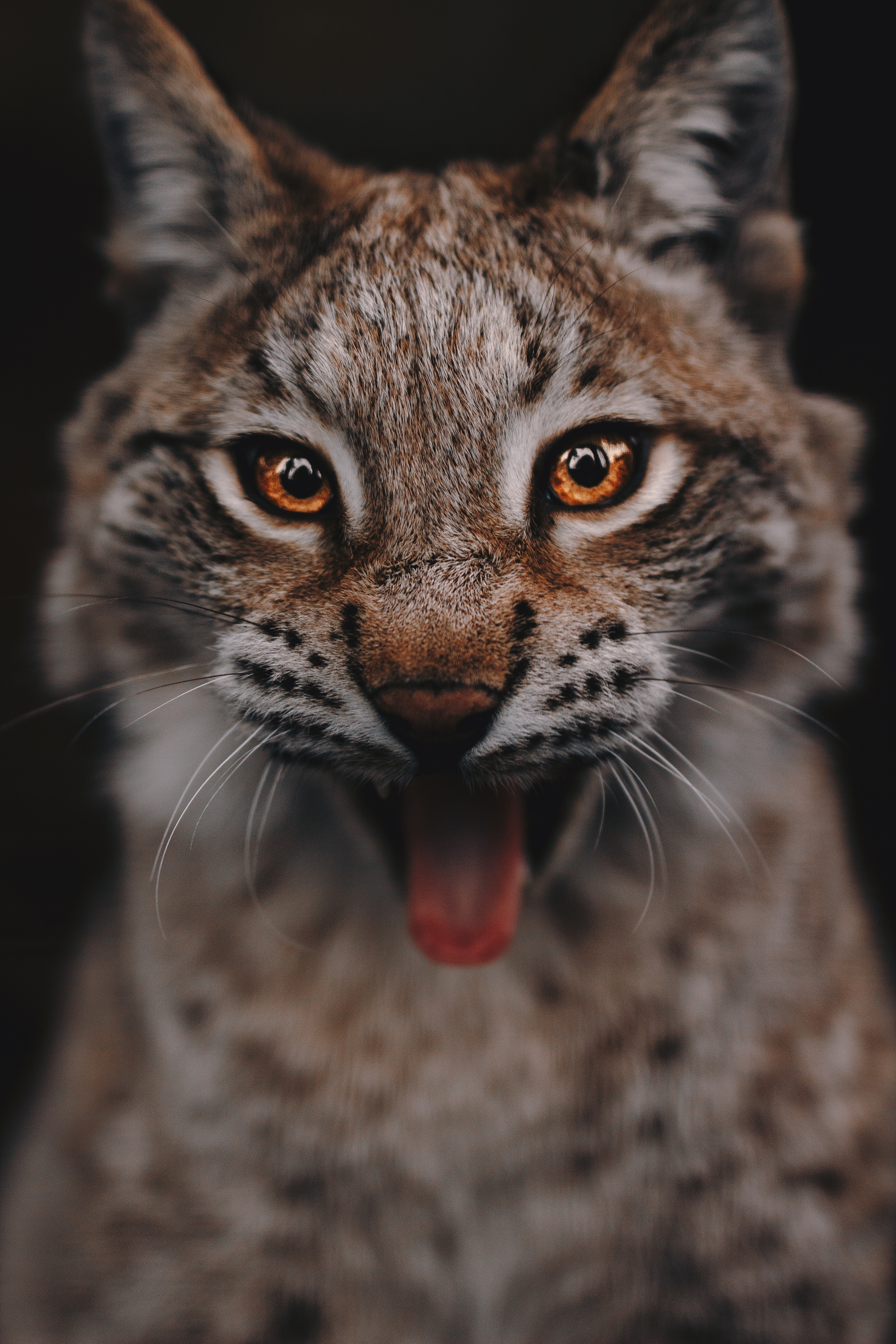 127856 download wallpaper Animals, Iris, Predator, Big Cat, Sight, Opinion, Eyes screensavers and pictures for free