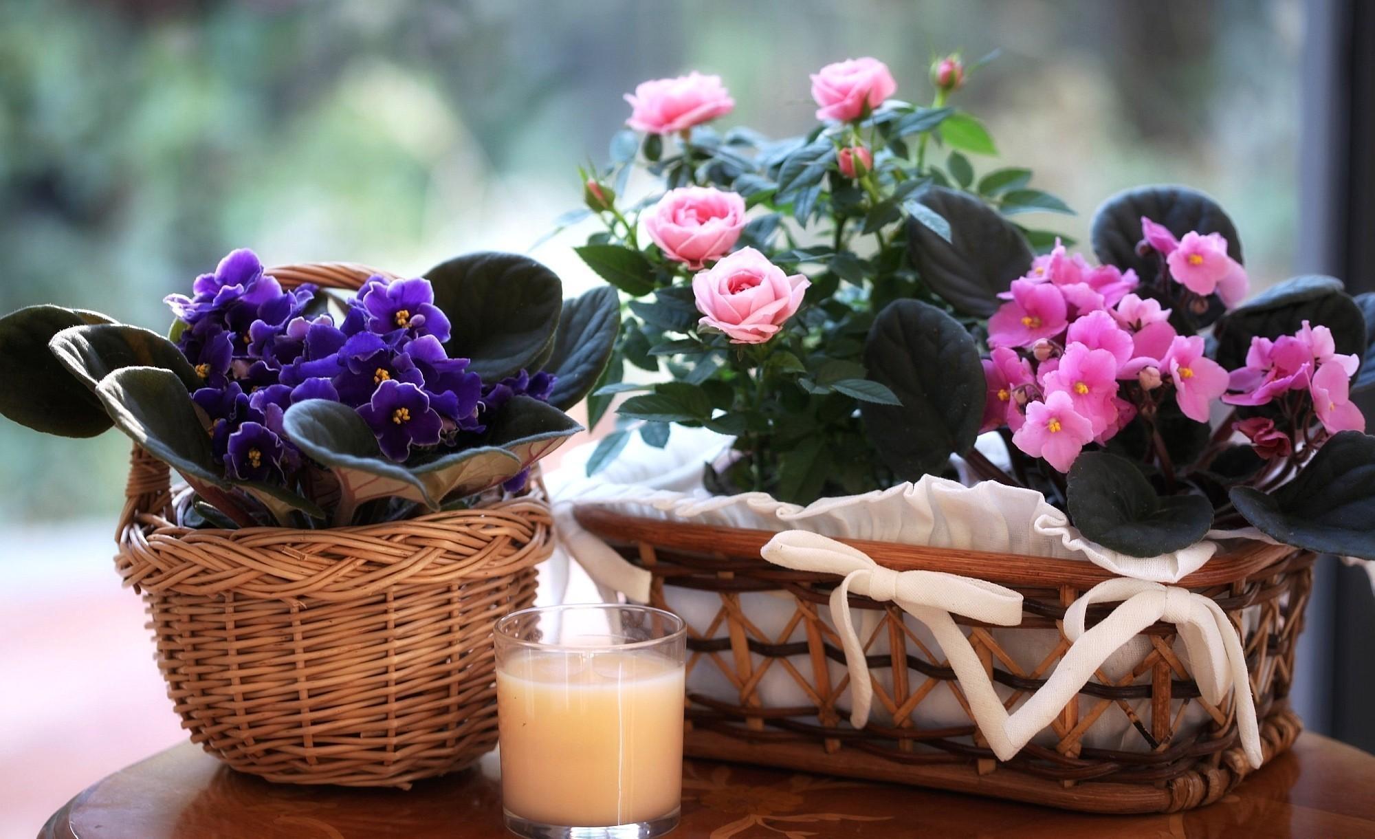 67396 Заставки и Обои Фиалки на телефон. Скачать Цветы, Розы, Фиалки, Цветение, Напиток, Стакан, Корзины картинки бесплатно