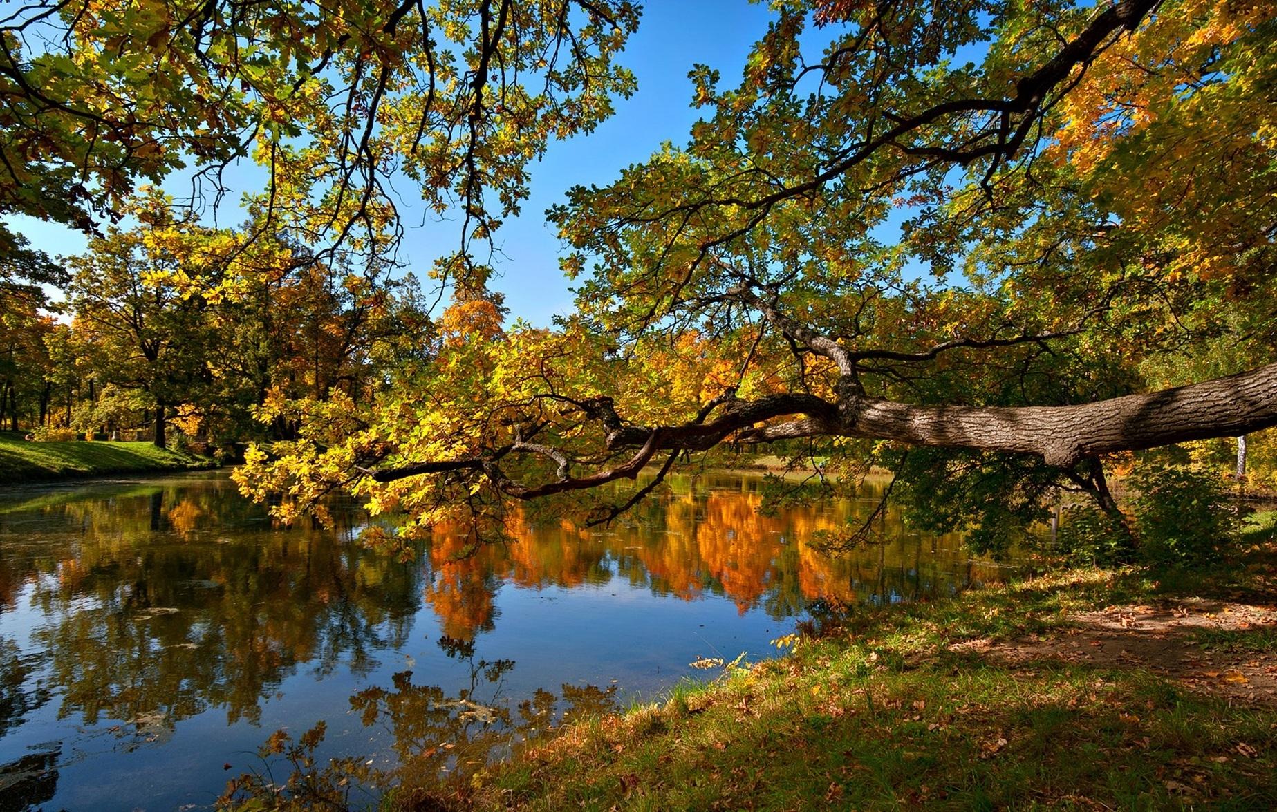 123065 скачать обои Осень, Природа, Пейзаж, Деревья, Пруд - заставки и картинки бесплатно