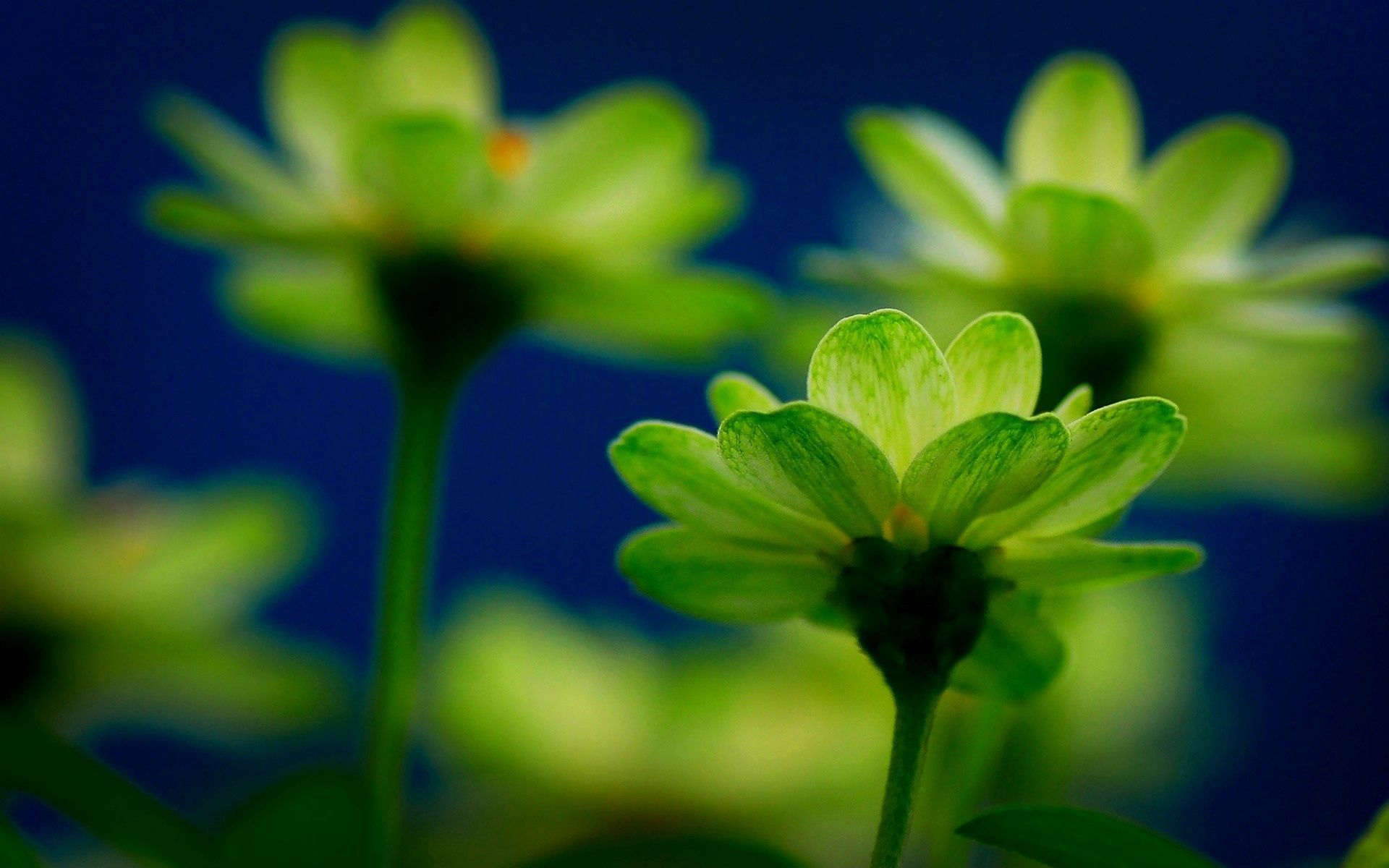 147341 download wallpaper Macro, Plant, Greens, Stem, Stalk, Flowers screensavers and pictures for free