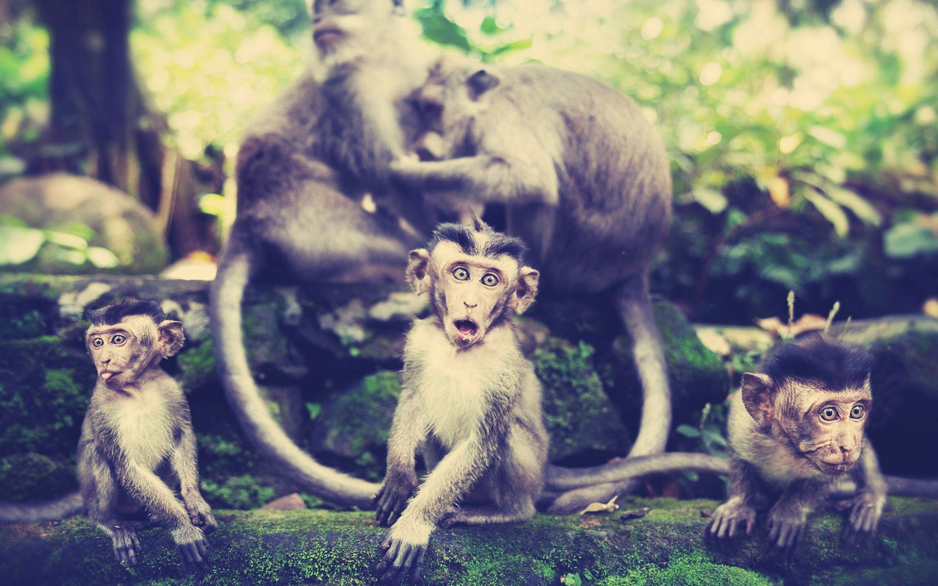 147558 Screensavers and Wallpapers Monkeys for phone. Download Animals, Monkeys, Stroll, Family pictures for free