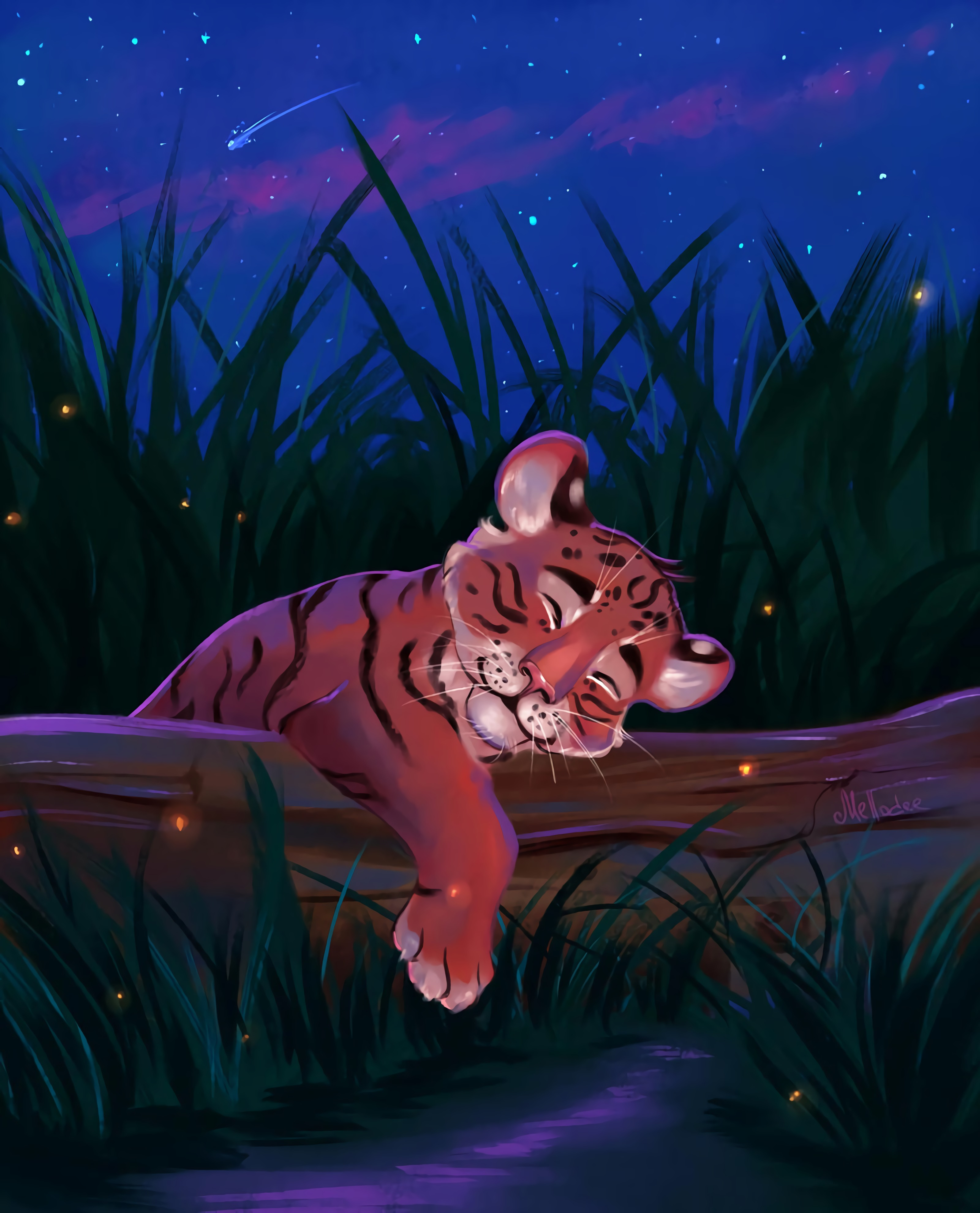 Beliebte Tiger Bilder für Mobiltelefone