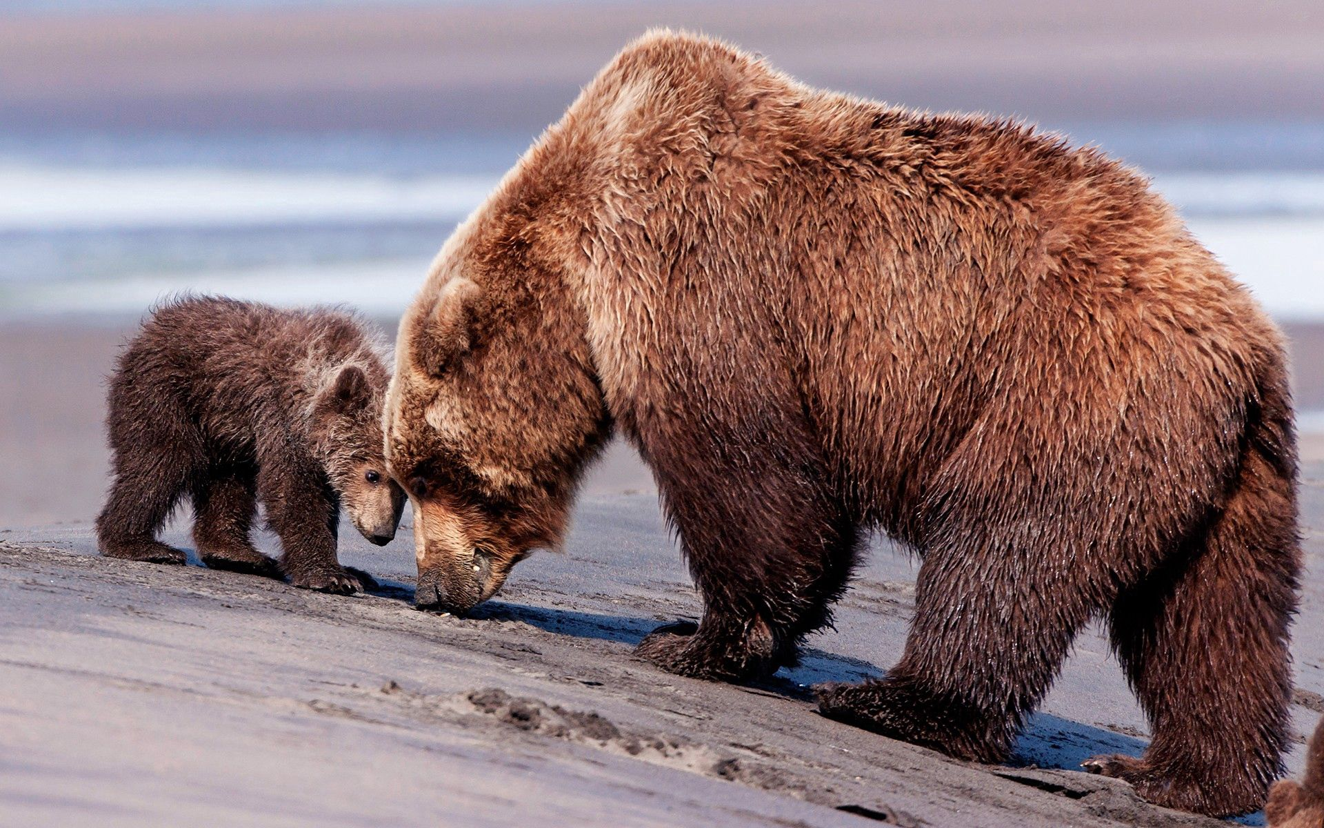 101392 Screensavers and Wallpapers Young for phone. Download Animals, Bears, Young, Couple, Pair, Joey pictures for free