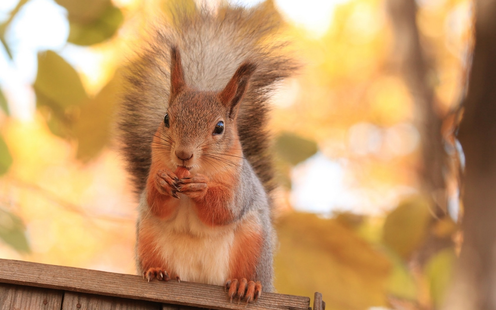 44578 download wallpaper Animals, Squirrel screensavers and pictures for free
