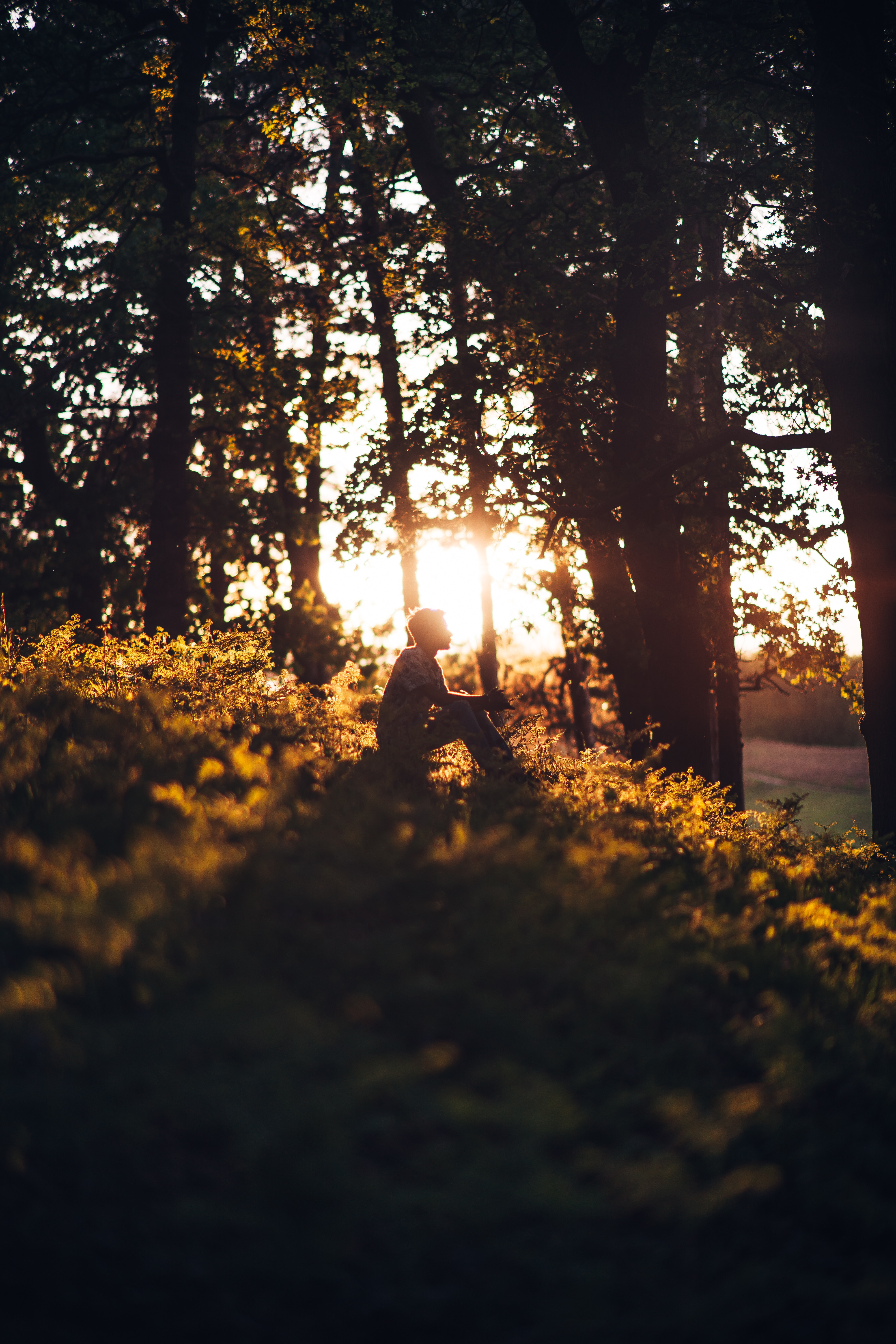 146933 download wallpaper Miscellanea, Miscellaneous, Human, Person, Forest, Shine, Light, Loneliness, Sun screensavers and pictures for free