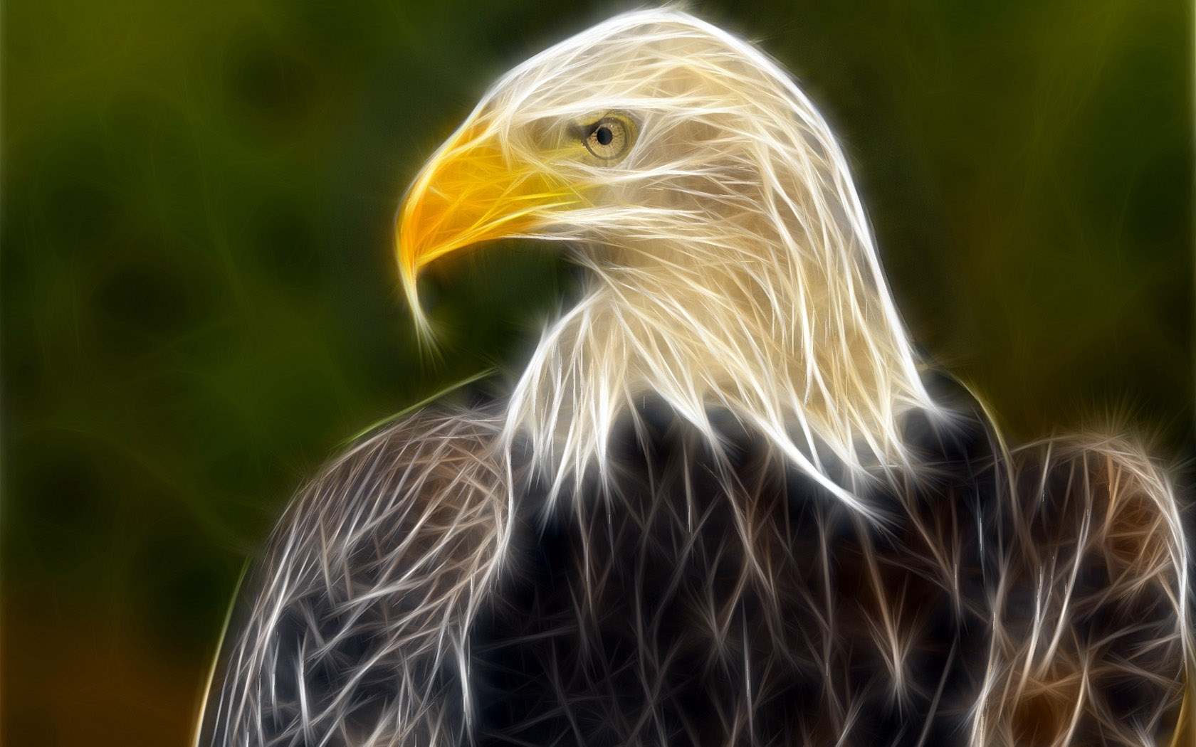 7816 download wallpaper Animals, Pictures, Eagles screensavers and pictures for free