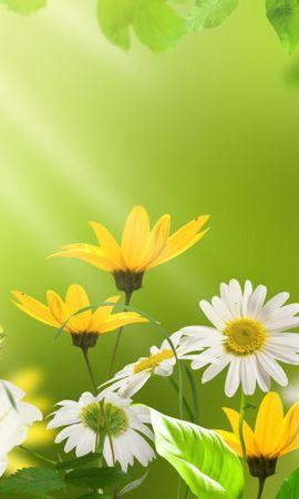 14186 descargar fondo de pantalla Plantas, Flores: protectores de pantalla e imágenes gratis