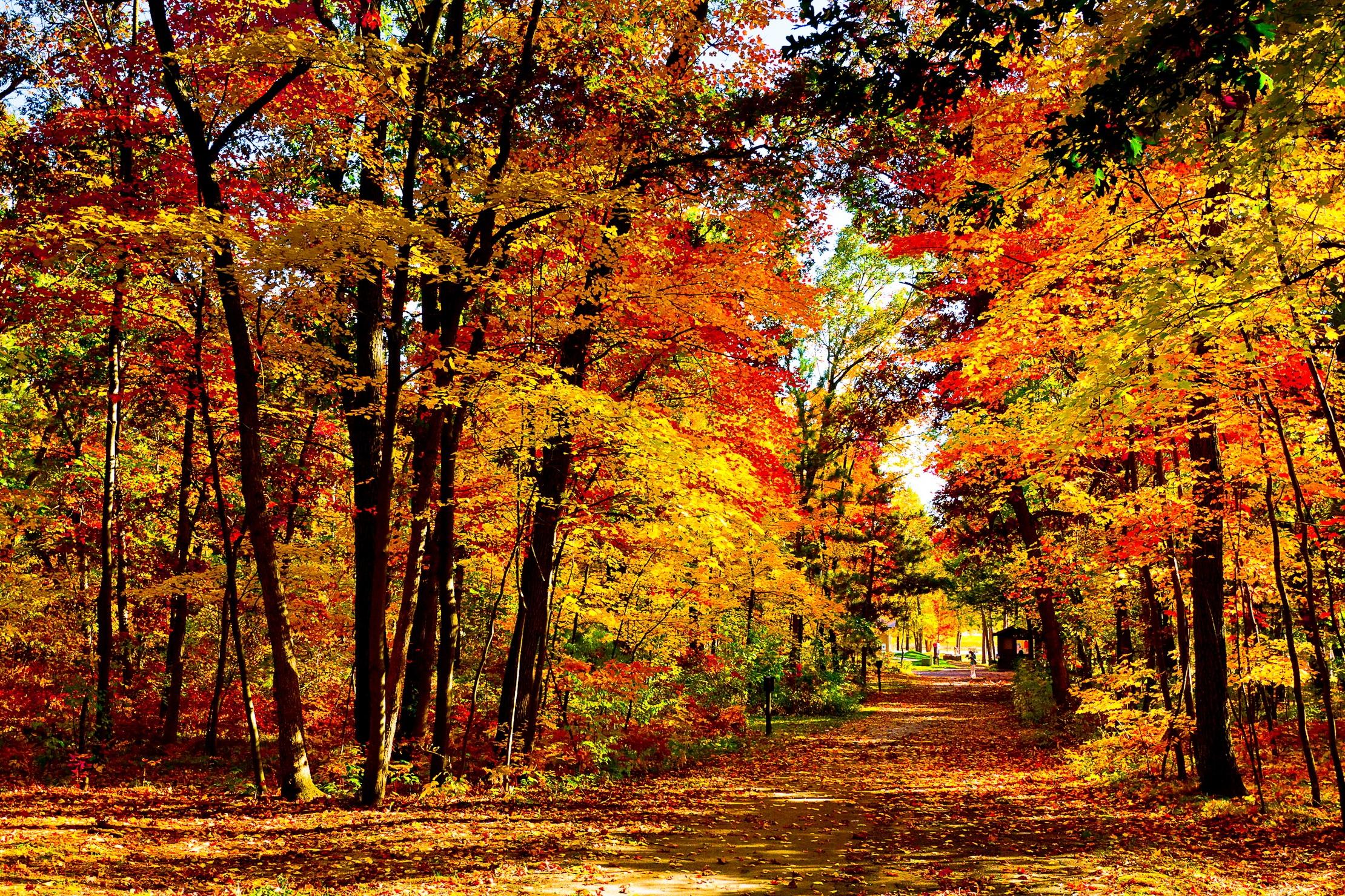 92266 Заставки и Обои Осень на телефон. Скачать Осень, Дорога, Природа, Деревья, Лес, Листопад, Сша, Ярко, Висконсин картинки бесплатно