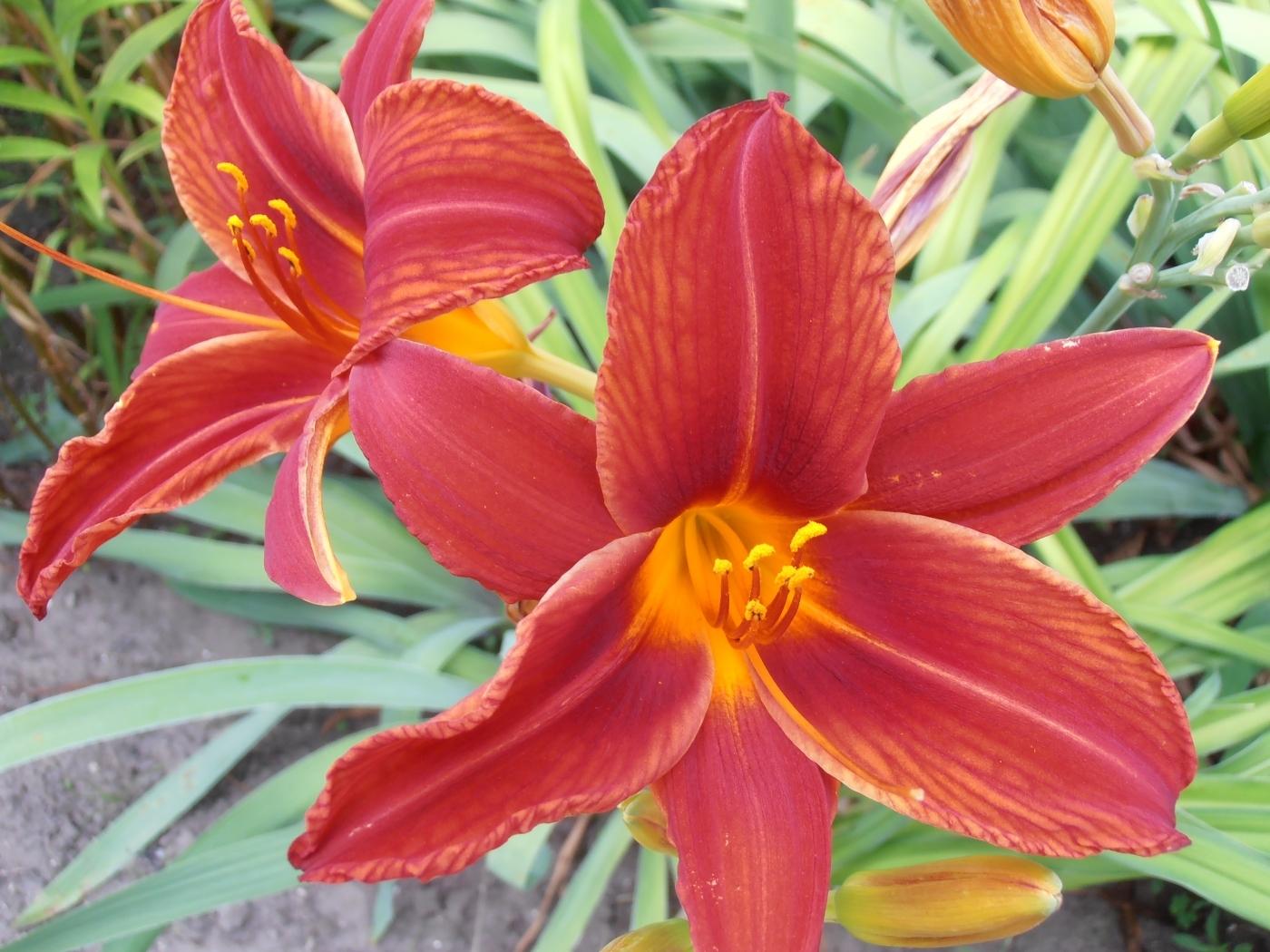 25838 скачать обои Растения, Цветы - заставки и картинки бесплатно