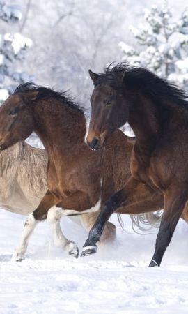 52890 baixar papel de parede Animais, Cavalos, Correndo A Galope, Correndo Um Galope, Inverno - protetores de tela e imagens gratuitamente