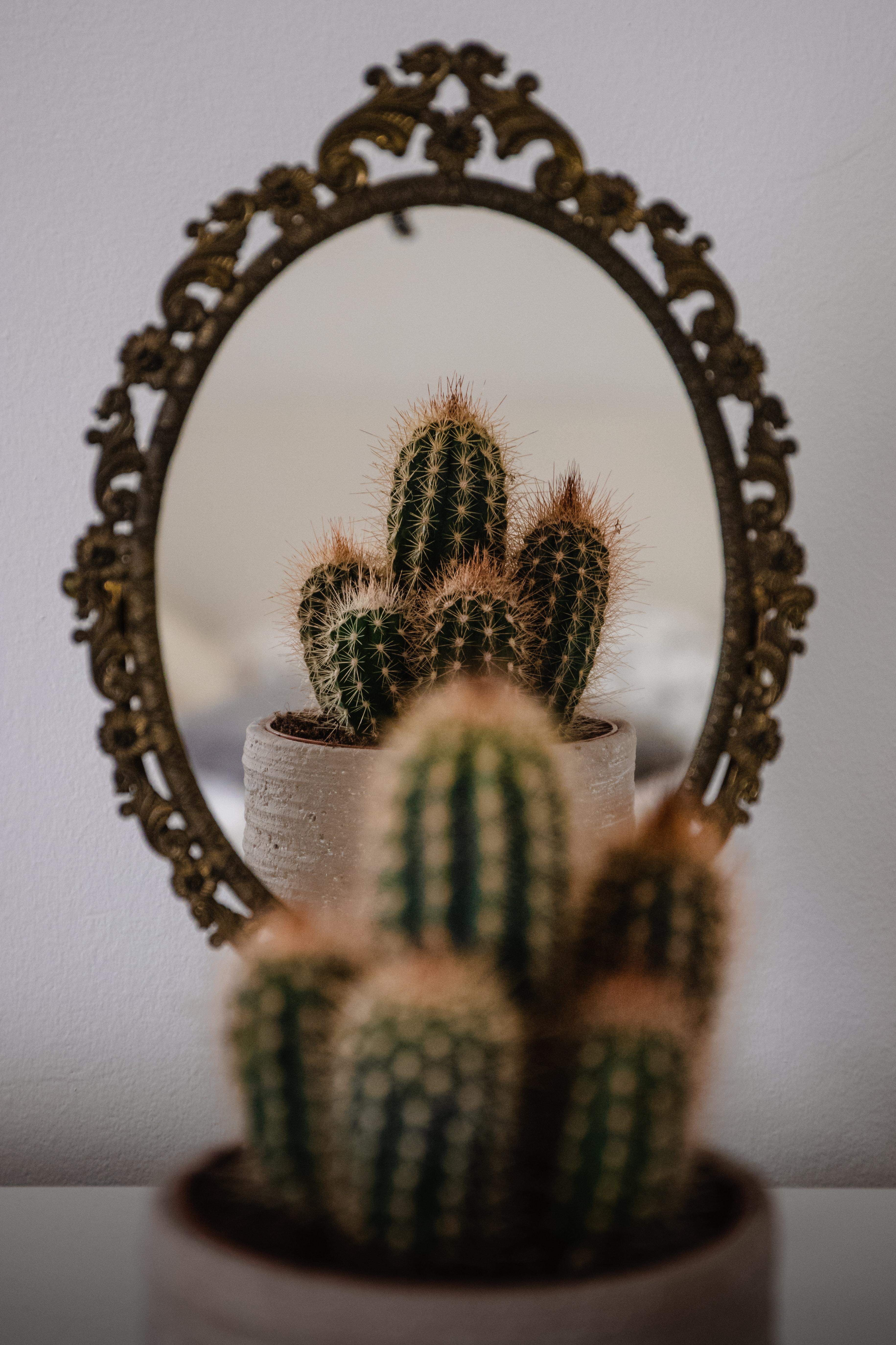 139369 télécharger le fond d'écran Divers, Cactus, Aiguille, Miroir, Réflexion - économiseurs d'écran et images gratuitement