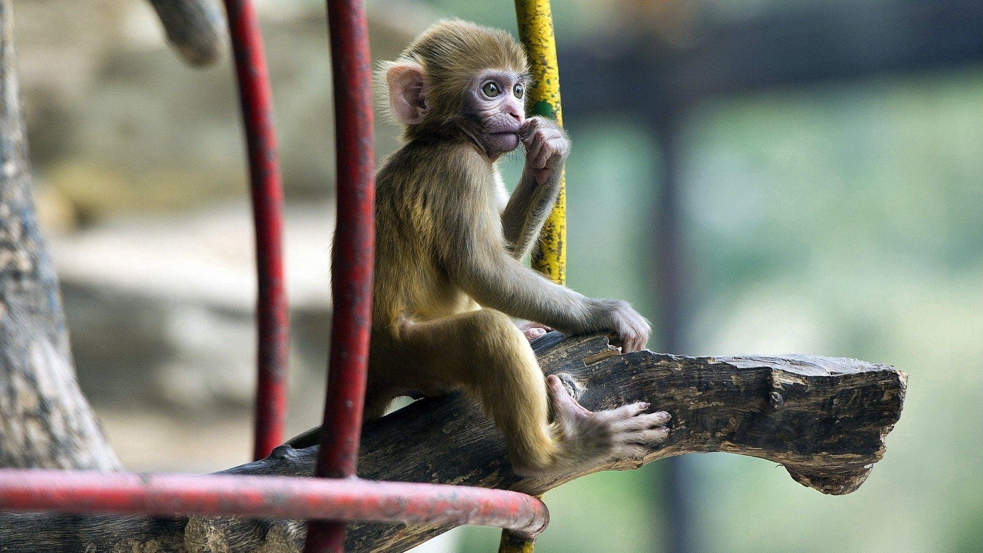 143786 Hintergrundbild 540x960 kostenlos auf deinem Handy, lade Bilder Tiere, Sitzen, Ein Affe, Affe, Kind, Tot, Marmoset 540x960 auf dein Handy herunter