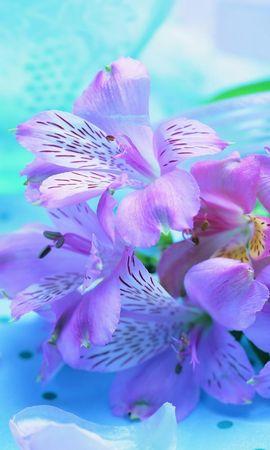 25527 скачать обои Растения, Цветы - заставки и картинки бесплатно