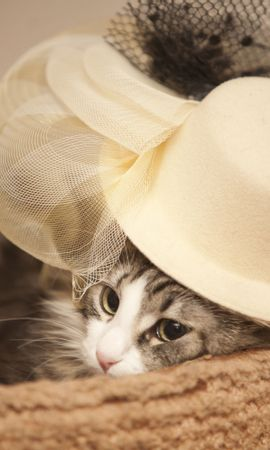 122110 download wallpaper Animals, Kitty, Kitten, Hat, Sight, Opinion, Muzzle screensavers and pictures for free