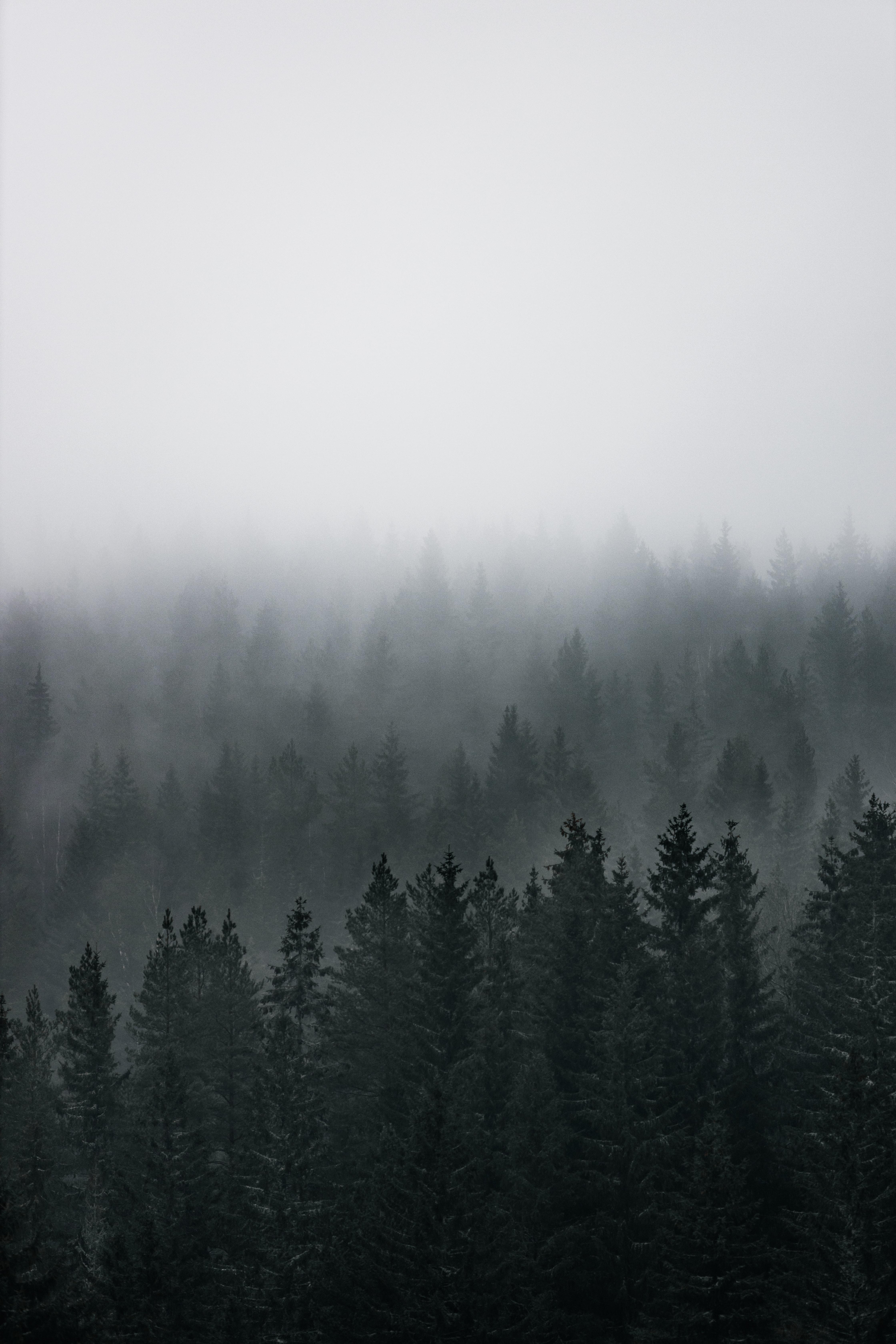138925 скачать обои Природа, Лес, Туман, Вид Сверху, Деревья, Хвойный, Сосны - заставки и картинки бесплатно
