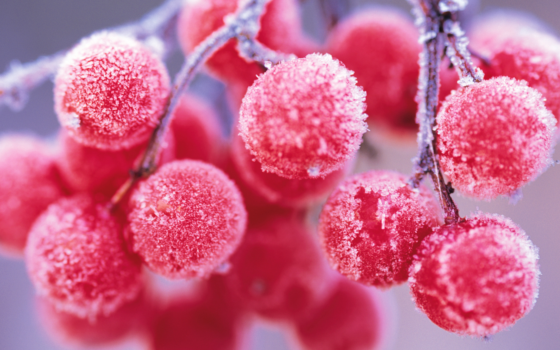 39632 download wallpaper Plants, Berries screensavers and pictures for free