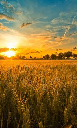 9693 скачать обои Пейзаж, Закат, Поля, Небо, Солнце, Пшеница - заставки и картинки бесплатно