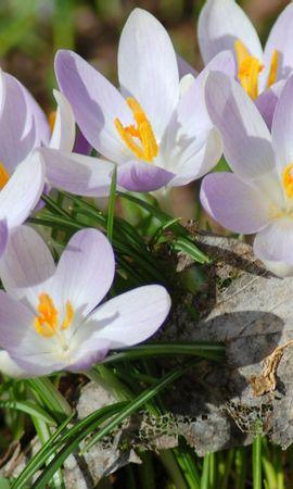 41147 télécharger le fond d'écran Plantes, Fleurs - économiseurs d'écran et images gratuitement