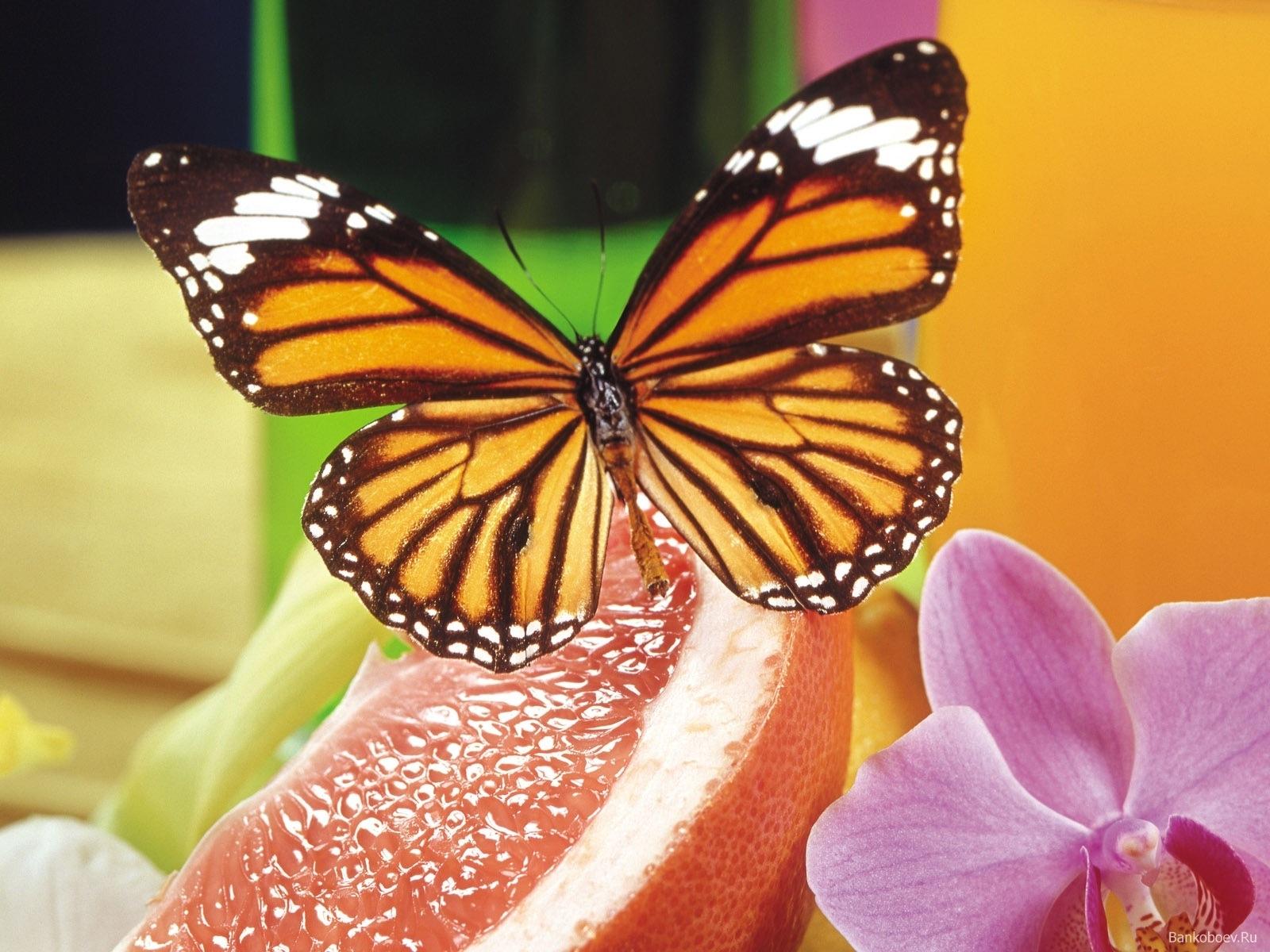 2890 скачать обои Бабочки, Насекомые - заставки и картинки бесплатно