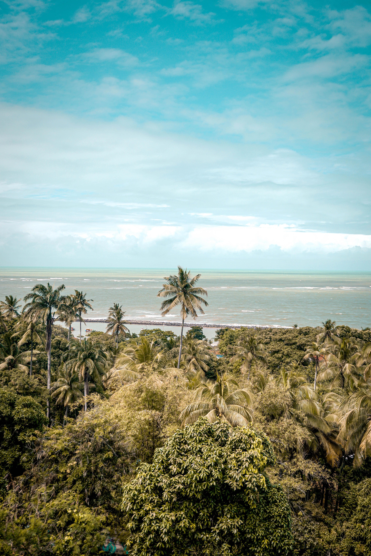 153793壁紙のダウンロード自然, 海, ビーチ, 熱帯, パームス-スクリーンセーバーと写真を無料で