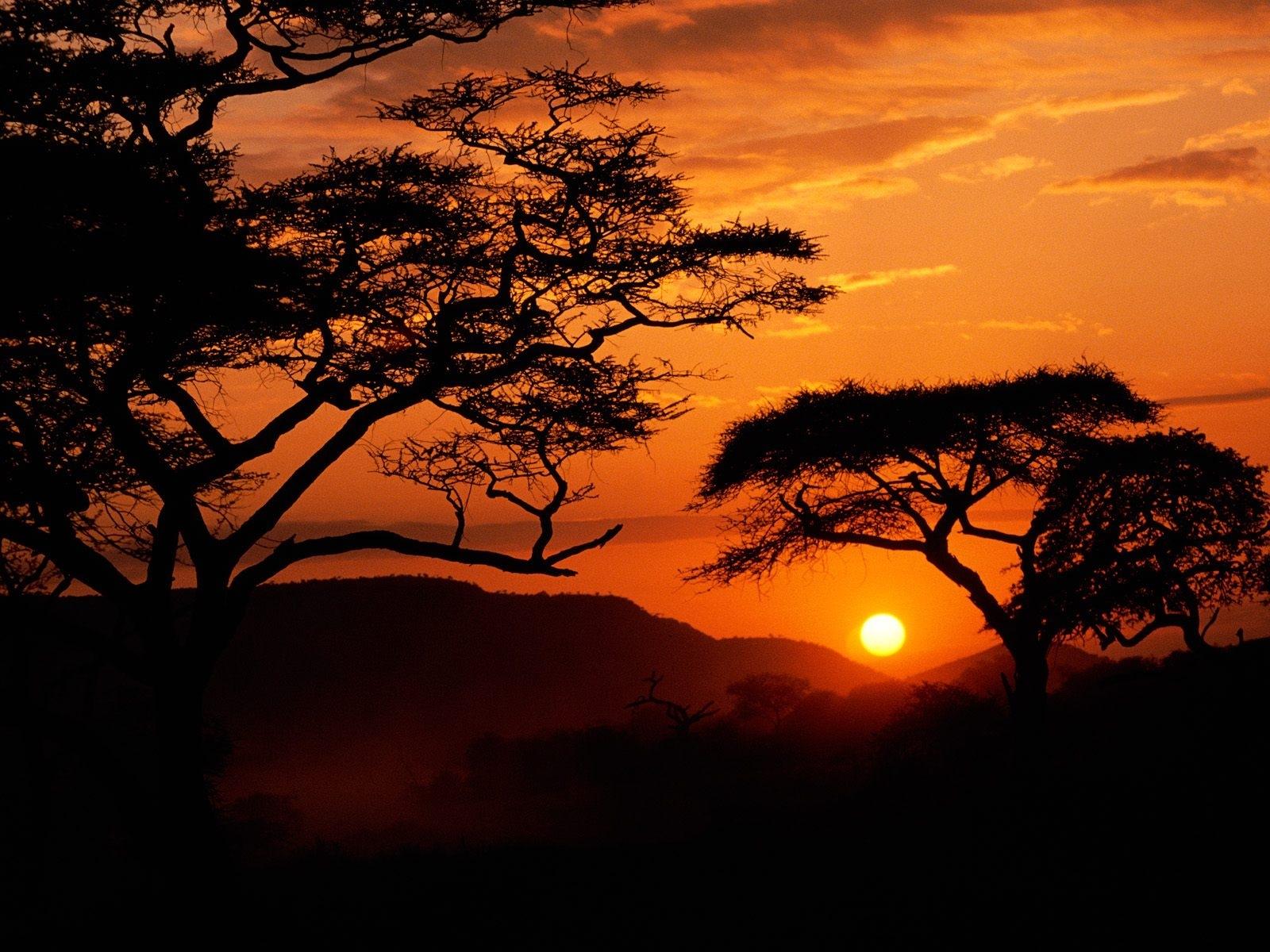 2420 скачать обои Пейзаж, Деревья, Закат, Небо, Солнце - заставки и картинки бесплатно