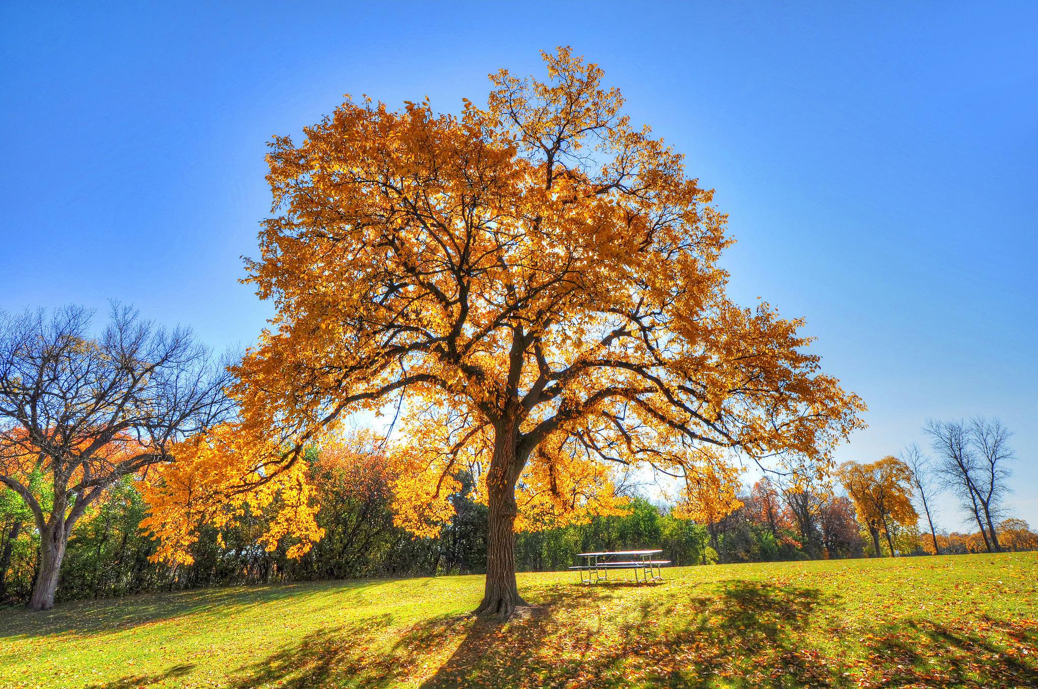 153459 Заставки и Обои Осень на телефон. Скачать Осень, Природа, Деревья, Трава, Тень картинки бесплатно