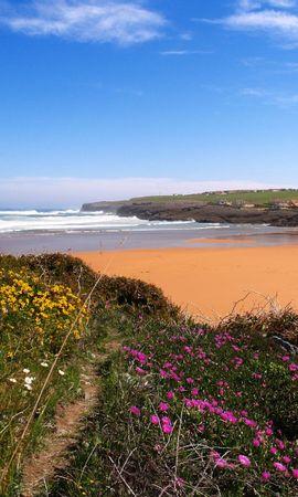 9878 скачать обои Пейзаж, Цветы, Пляж - заставки и картинки бесплатно