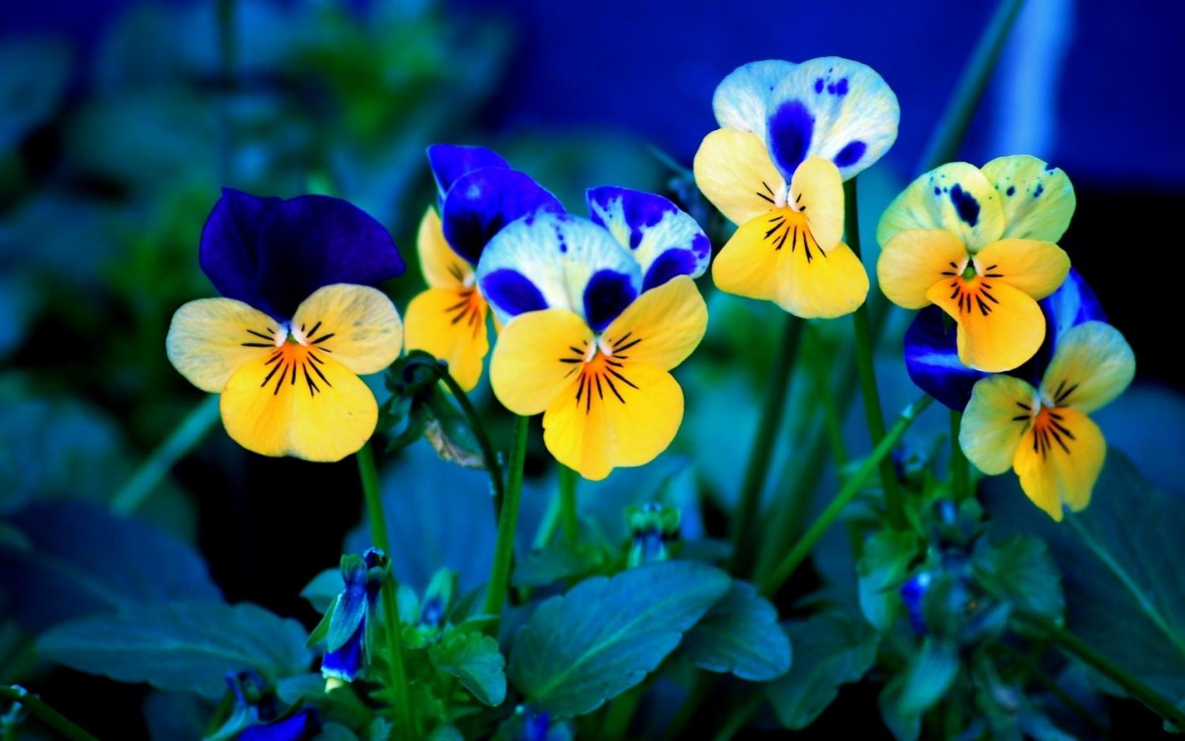 45310 скачать обои Растения, Цветы - заставки и картинки бесплатно