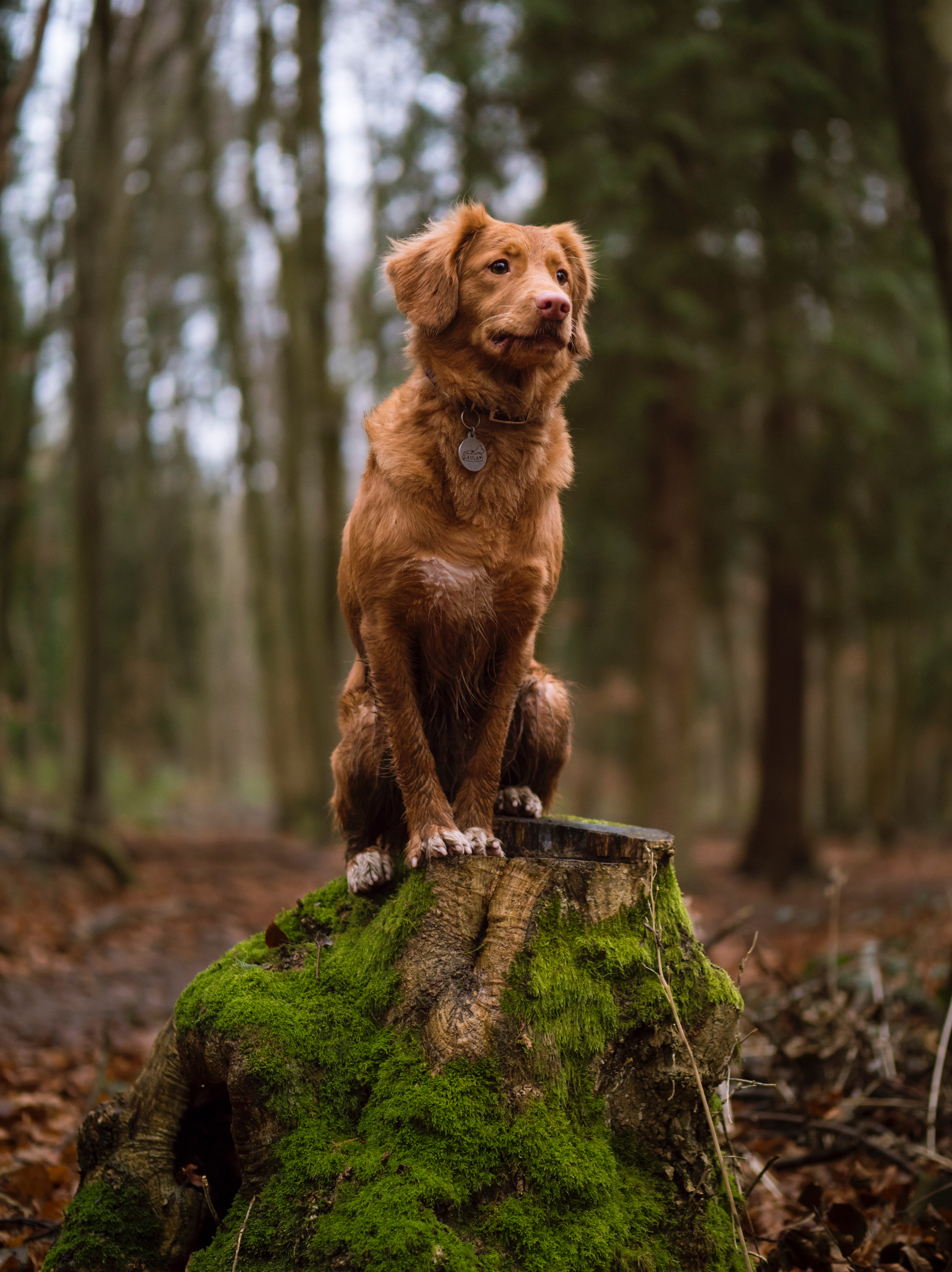 158093 download wallpaper Animals, Dog, Is Sitting, Sits, Stump, Moss, Stroll screensavers and pictures for free