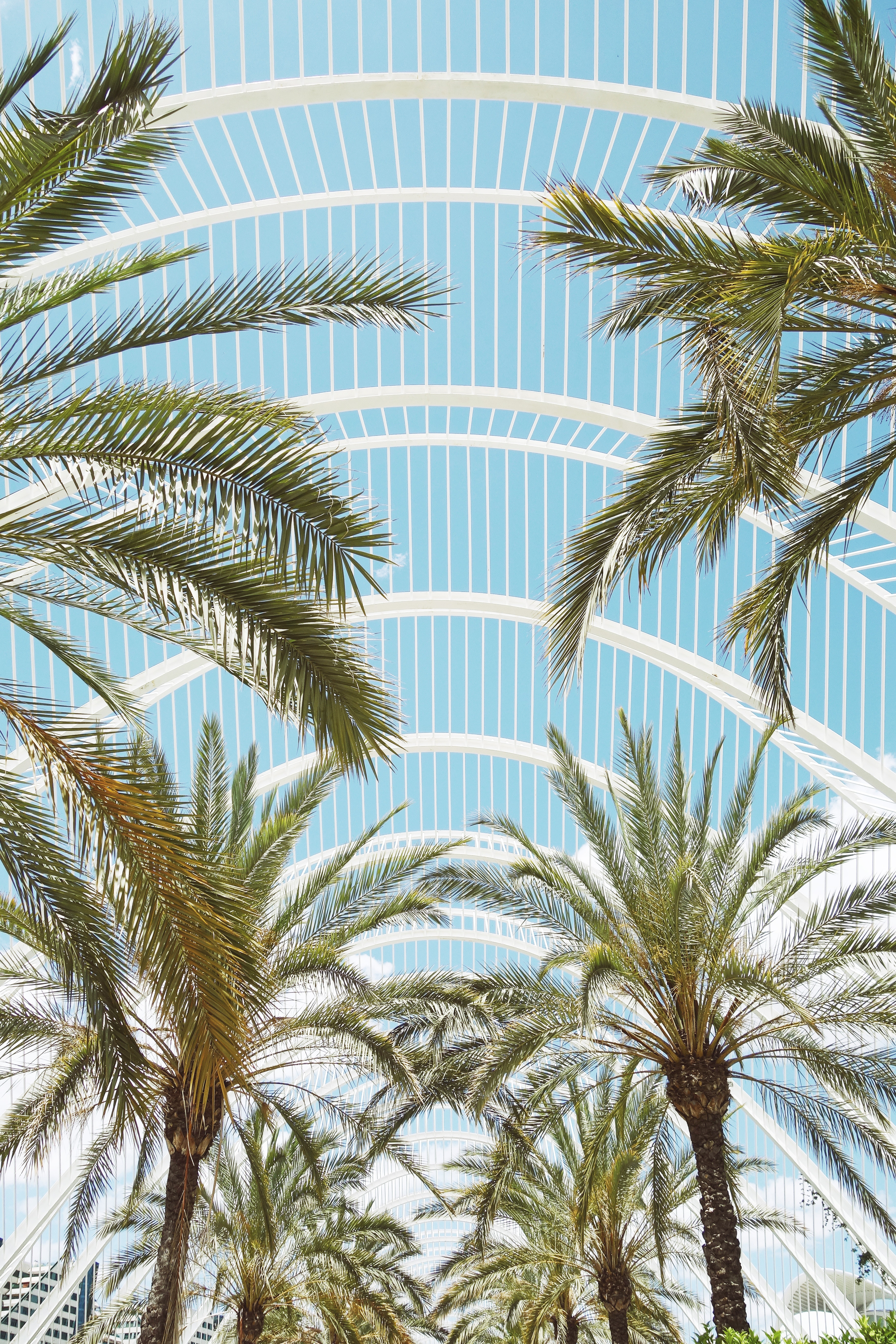 125756 download wallpaper Nature, Branches, Roof, Architecture, Palms screensavers and pictures for free