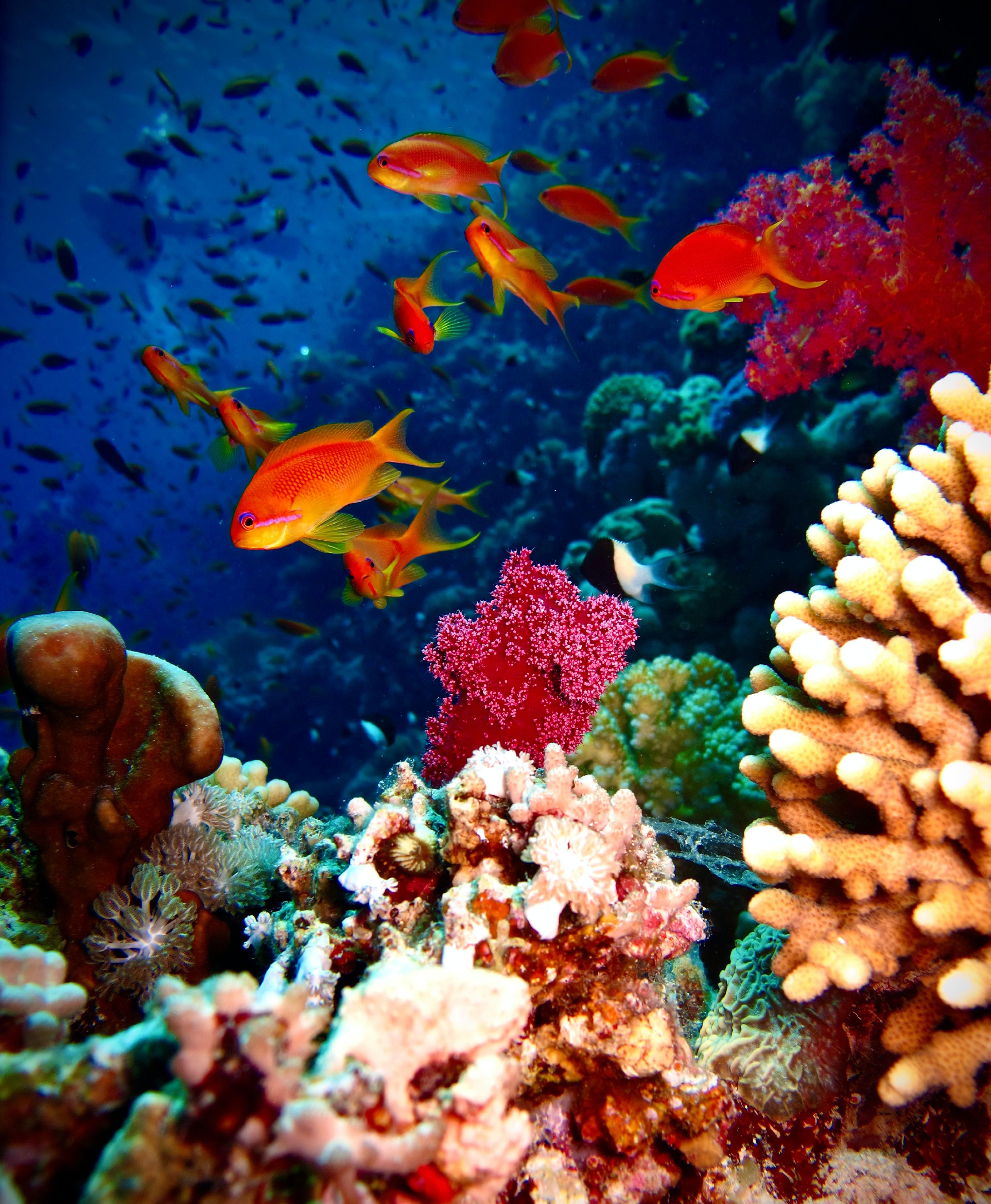 73437 Screensavers and Wallpapers Aquarium for phone. Download Animals, Coral, Aquarium, Fish, Reef pictures for free